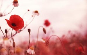 remembrance-day